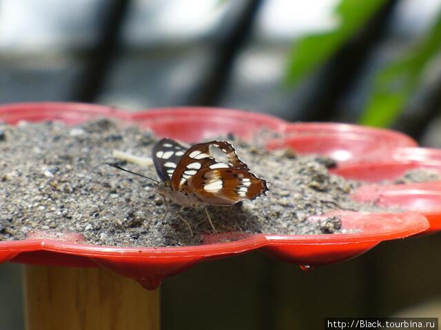 В саду бабочек