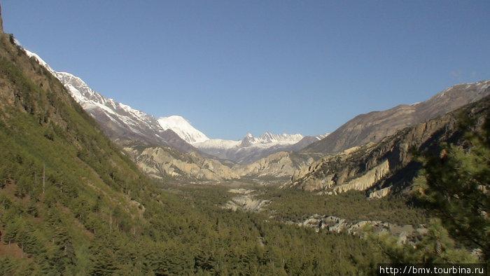 Хвоиные леса на высоте более 2000 м.