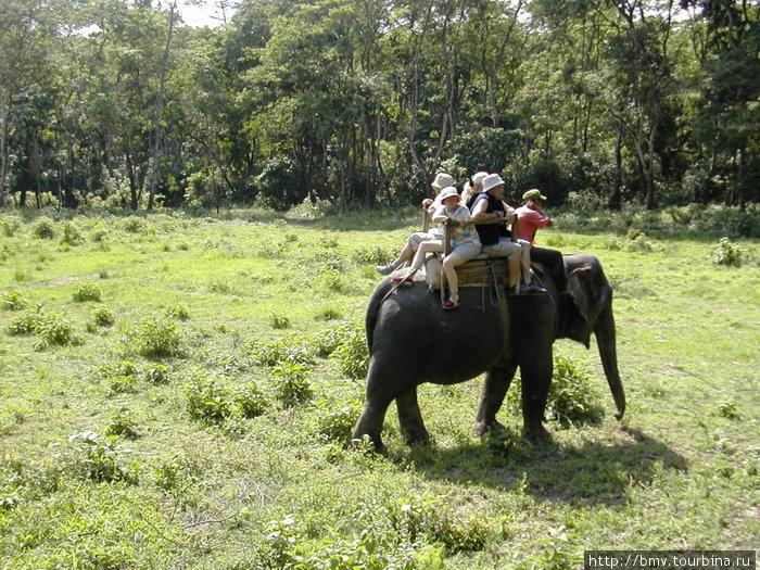 Прогулка на слонах в Чатване.