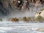 Роща у Кагбени в пыльной буре