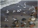Птицы моря