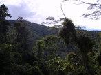Город Набире окружают джунгли