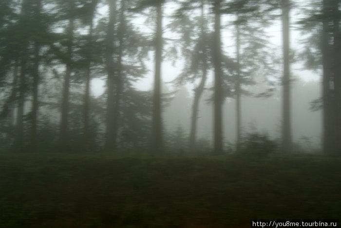 лес вдоль обочины