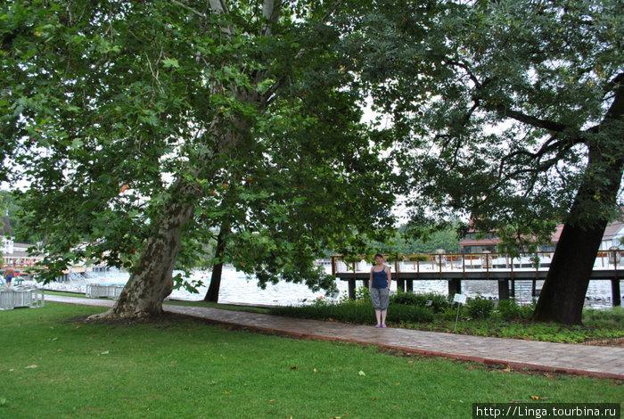 Вокруг озера прекрасный газон, вековые платаны и другие деревья с раскидистой кроной.