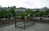 Выставка бонсаев в одном из двориков