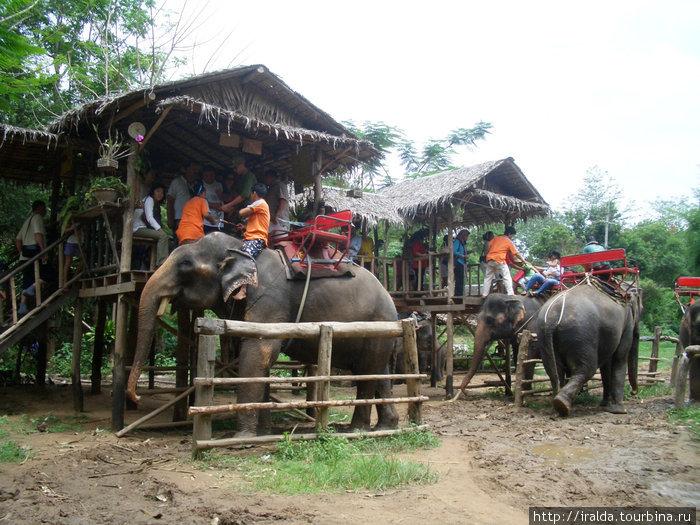 Очень увлекательная поездка в слоновью деревню, где в почти естественных условиях живут и работают около 40 слонов. Один из этих слонов был нашим спутником по джунглям, а вернее мы его спутники.
