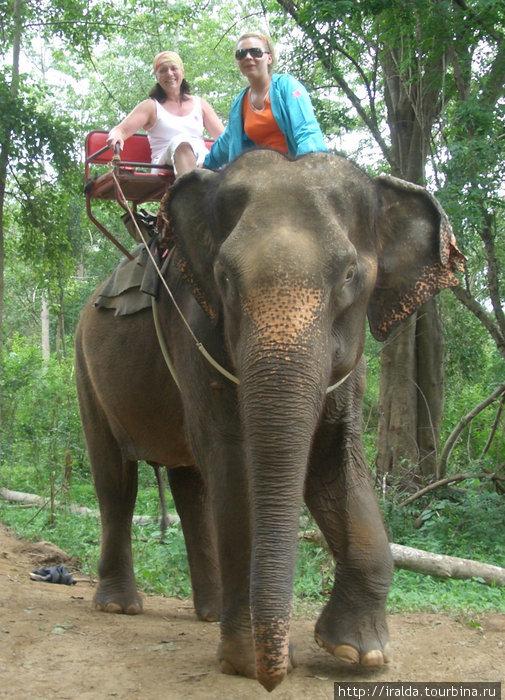 Несмотря на то, что скамейка, на которой мы разместились, была прочно укреплена на могучей слоновьей спине, во время крутого спуска к воде слон принимал почти вертикальное положение — было страшно...