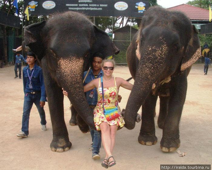 Гид сообщил,что шоу слонов занесено в книгу рекордов Гиннеса. Действительно, есть чему удивляться, смотря на то, что могут делать слоны, которые играют в футбол и забивают голы в ворота; баскетбол...