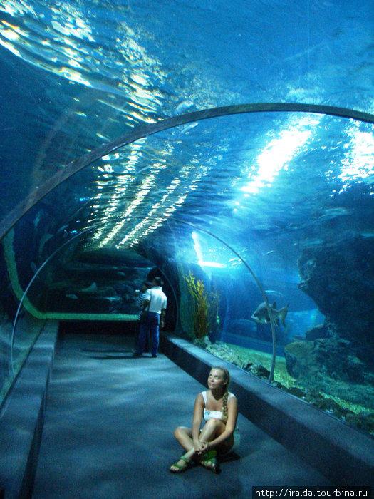 Bangkok.В торговом центре Siam  Paragon находится самый крупный в Азии океанариум. Мы не отказываем себе в удовольствии посетить его