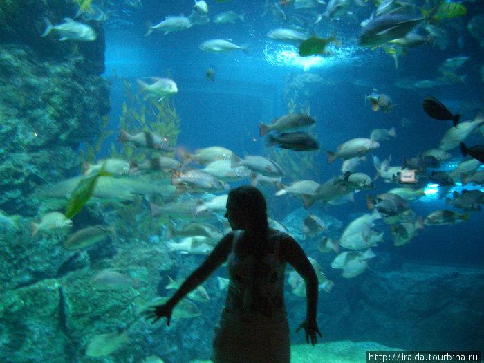 Bangkok.Океанариум вмещает более 4-х миллионов литров воды (3 Олимпийских бассейна) и предоставляет уникальную возможность воочию полюбоваться на обитателей морских глубин.