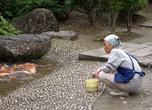Время кормления карпов в пруду