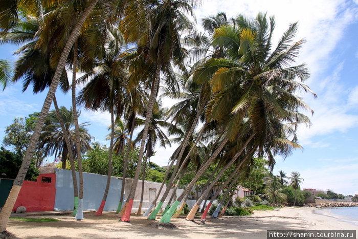 Пальмы на пляже