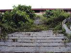 Заросшая лестница в небо (к дому)