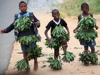 Это первая фотография, сделанная в Свазиленде. Дети на обочине танцуют, выпрашивая мелочь у водителей.