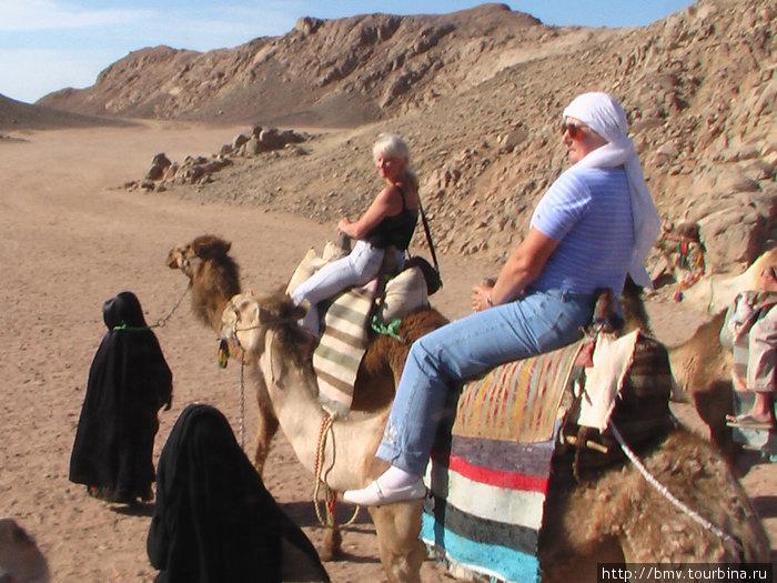 Верблюжьи бега.