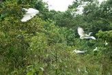 белые птицы в кустах