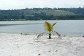 птицы на пустом пляже