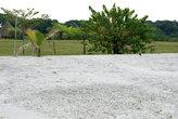 пляж с белым песком и большие птицы