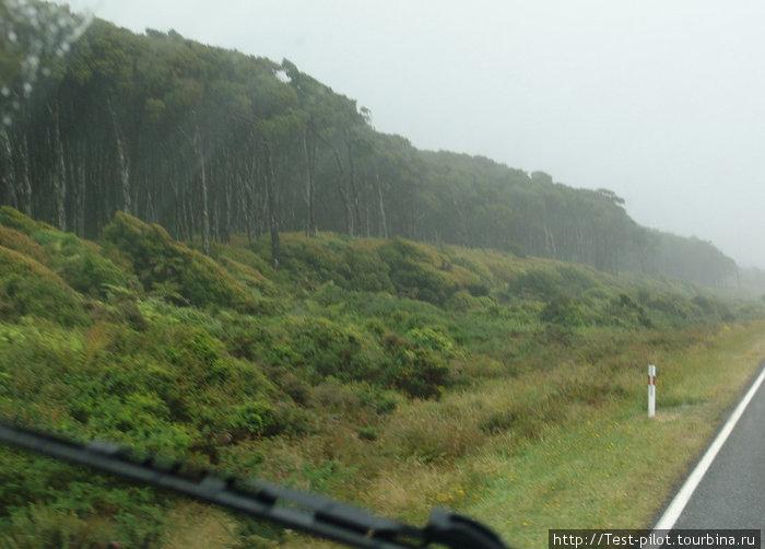 Это тоже чисто новозеландские растения. Какука (повыше) и манука