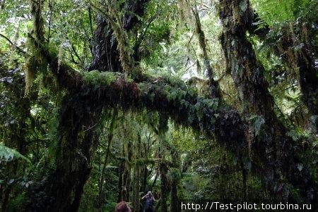 Лес.  Внизу фотографии чуть заметны хоббиты