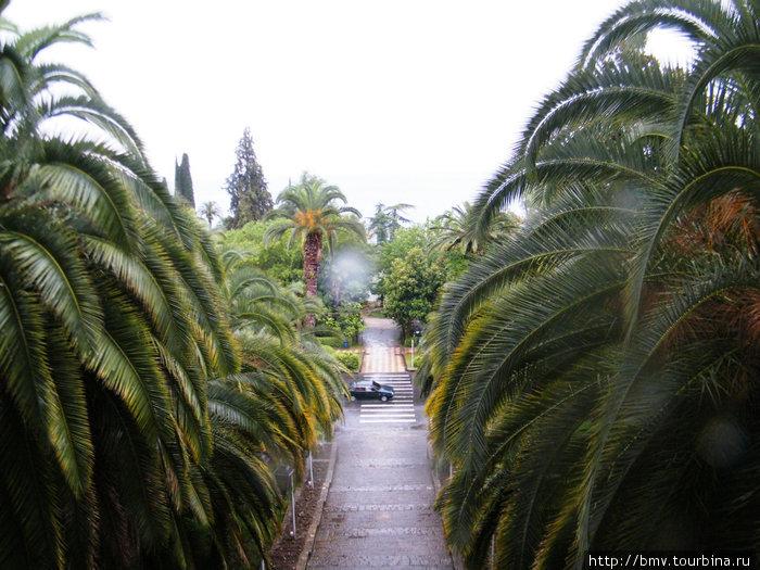 Пальмы в Гаграх.