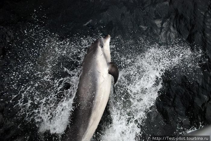 дельфины сопровождали наш кораблик, выпрыгивая перед его носом и вызывая восторг у туристов.