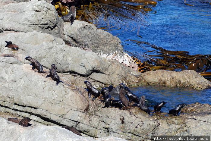 Тихоокеанское побережье Южного острова. Тюлений детский сад.