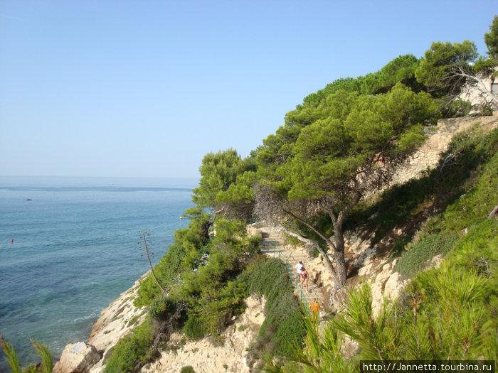 Лестница к пляжу через сосновую рощу.