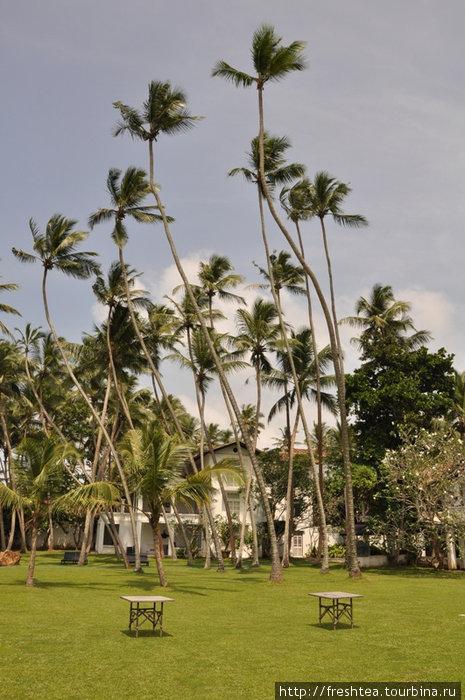 Союз стихий — земли, неба и света — раздвигают пространство внутреннего дворика в The Villa до бесконечности.