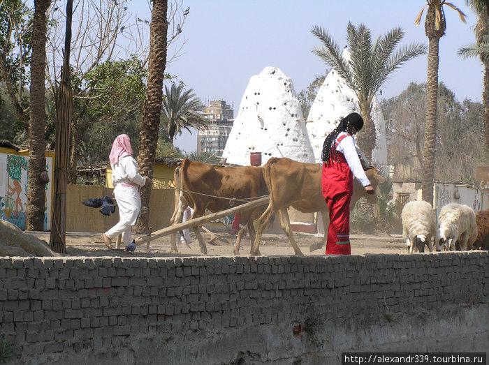 Каир. Деревня фараонов