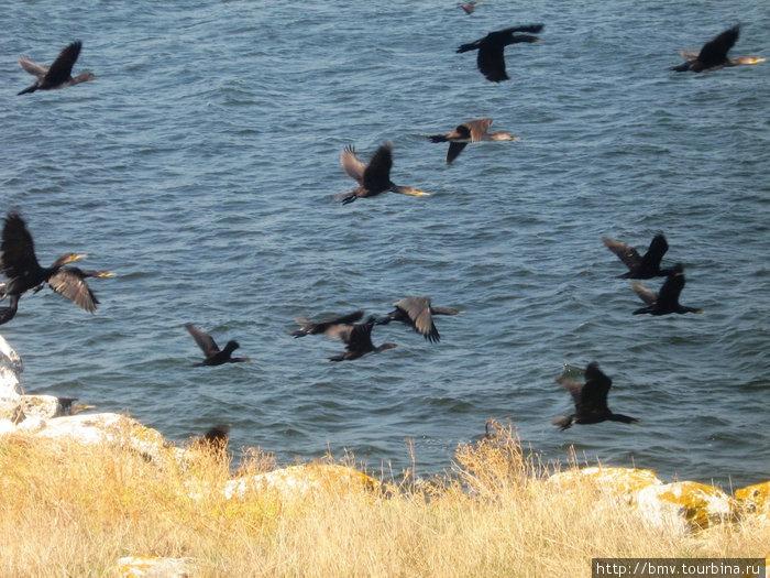 Птицы в полете.