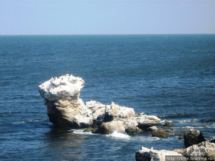 Птицы на скалах.