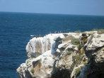 Скалы, море, птицы.