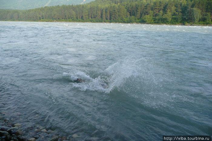 Когда окунаешься в воду, в тело врезаются тысячи ножей, решительно уносит течением, и хочется поскорее выскочить на солнышко!!!