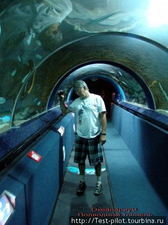 Оклендский океанариум.