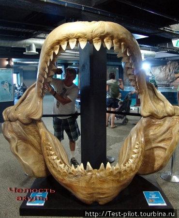 Челюсть акулы — умрешь от страха, прежде чем такая тебя проглотит