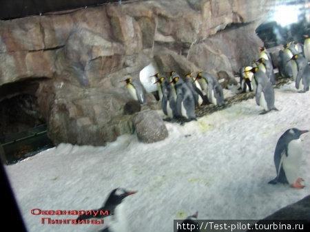 Павильон Встреча с Антарктикой.  Садишься в вагончик, который въезжает в павильон, а там, за стеклом 40-50 пингвинов – потешные! И дерутся, и общаются между собой, и воруют друг у друга, и купаются