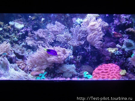Цвета подводного мира Тихого океана