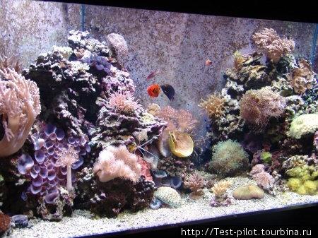 Цвета подводного мира