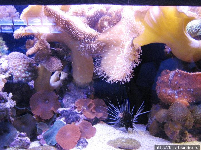 Кораллы и ежи