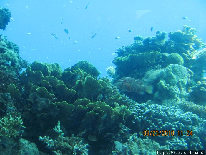 Цветные коралы.