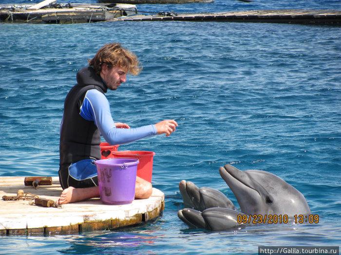 Кормление дельфинов.