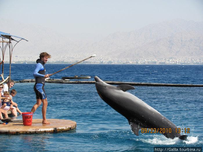 Обучение по желанию дельфина.