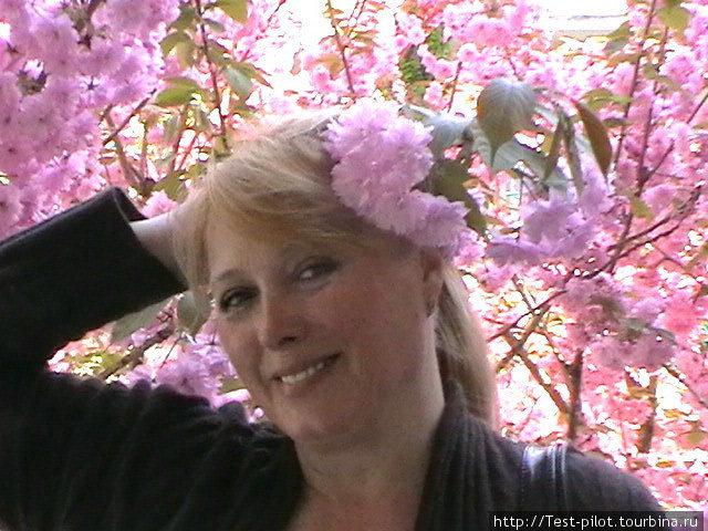Середина апреля. В Труа цветет сакура.