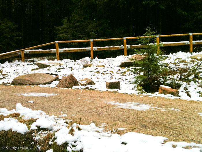 Первый снег стал появляться довольно быстро — стоило нам только зайти в лес.