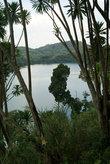 пальмы над озером