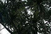в кронах пальм