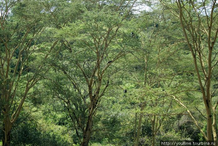 на деревьях синие обезьяны