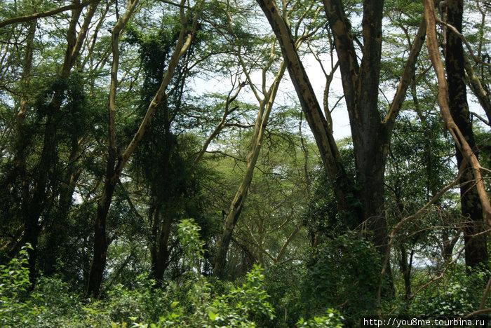 сказочный лес
