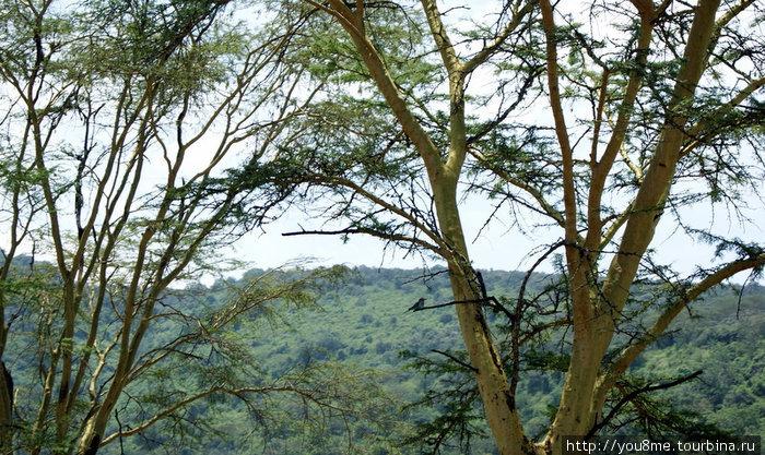 птицы в кронах деревьев